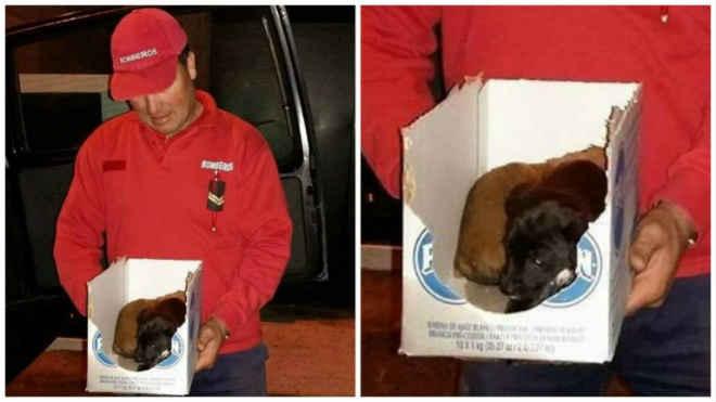 Bombeiros resgatam cães de contentores de lixo em Portugal