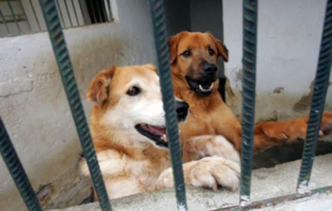 Portugal: Indivíduo que agrediu cães à paulada vai ser julgado por maus-tratos de animais