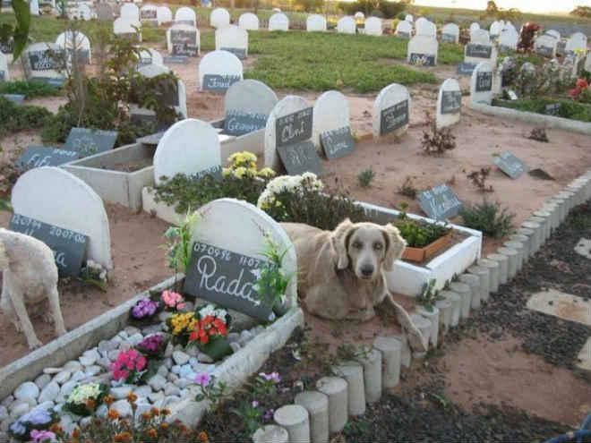 Portugal: Lagos lança primeira pedra do cemitério para animais
