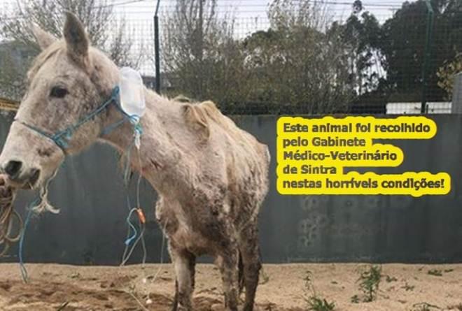 Animal abandonado vítima de negligência e de maus-tratos em Sintra, Portugal