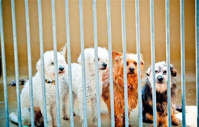 Portugal: Novo estatuto jurídico dos animais entra em vigor a 1 de maio