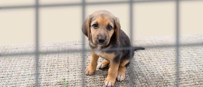Portugal: Mais de mil crimes contra animais registados em apenas um ano