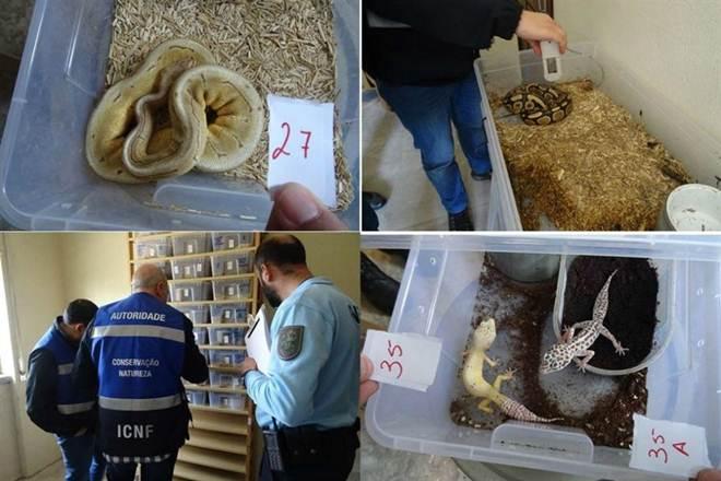 Milhares de animais salvos em operação que culminou em Portugal