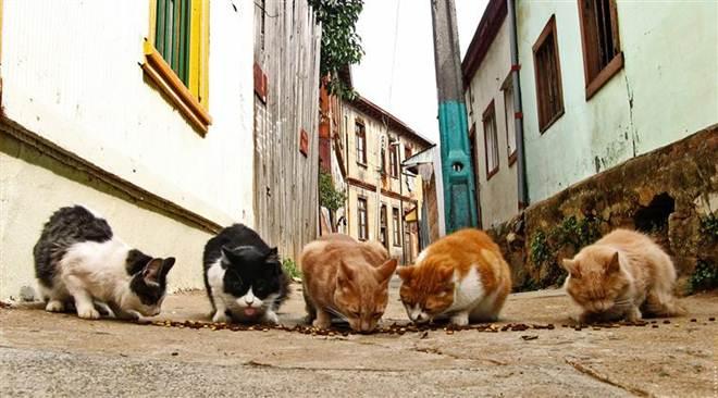 Protetores de animais nas ruas lançam petição em Portugal