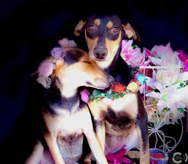 Cachorros do Canil Municipal de Cabo Frio (RJ) ganham ensaio fotográfico para incentivar adoção