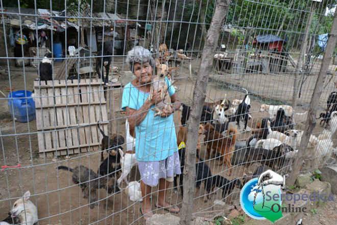 Mulher muito pobre cria 115 cachorros em Seropédica, RJ