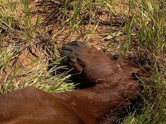 Cavalo abandonado agoniza há cinco dias em Resende, RJ