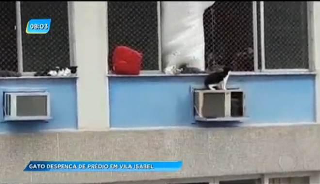 Gato que despencou de janela de apartamento no Rio passa bem