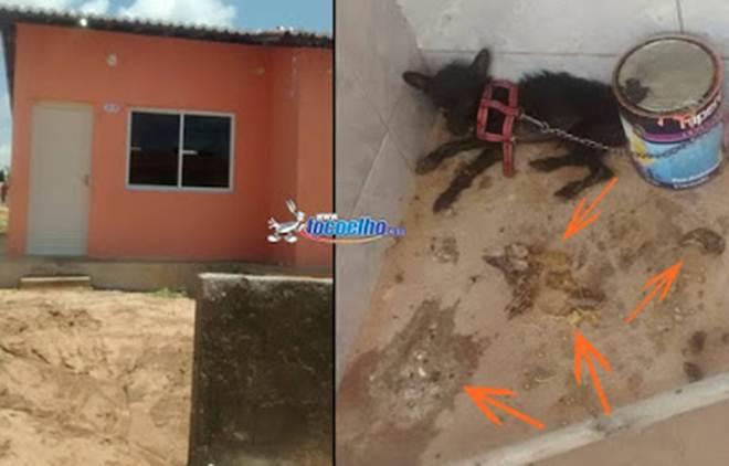 Animal come as próprias fezes em residência no conjunto Cristóvão Dantas, em Assu, RN