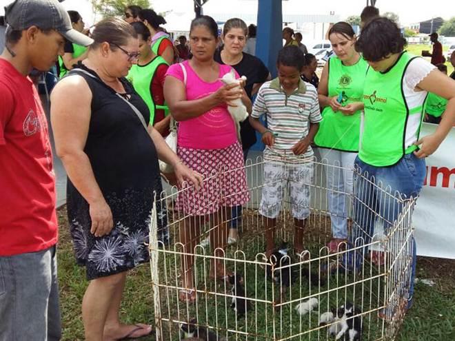 ONG Amparo Animal anuncia fim de atividades em Ji-Paraná, RO