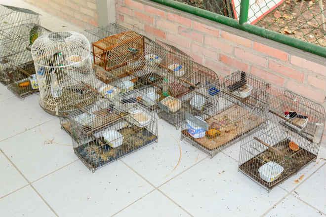 Fiscais apreendem 14 pássaros silvestres em cativeiro na zona Sul de Boa Vista, RR
