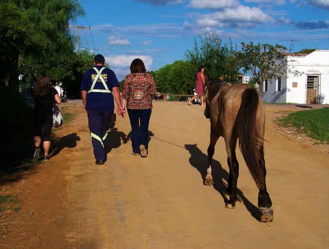 Cavalo que sofria maus-tratos é recolhido durante operação em Bagé, RS