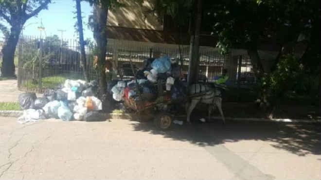 Vítima de maus-tratos, cavalo é resgatado na Zona Norte de Porto Alegre, RS