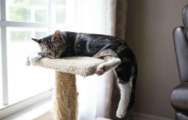 Reality show com gatos para adoção faz sucesso na internet