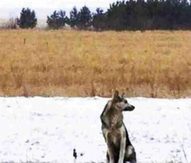 Fiel, cachorro espera por tutor morto em acidente retornar
