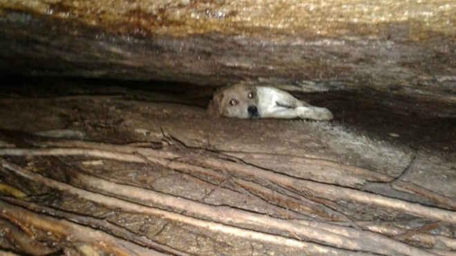 Bombeiros resgatam cadela presa em fenda de pedra após 10 horas de trabalho em SC