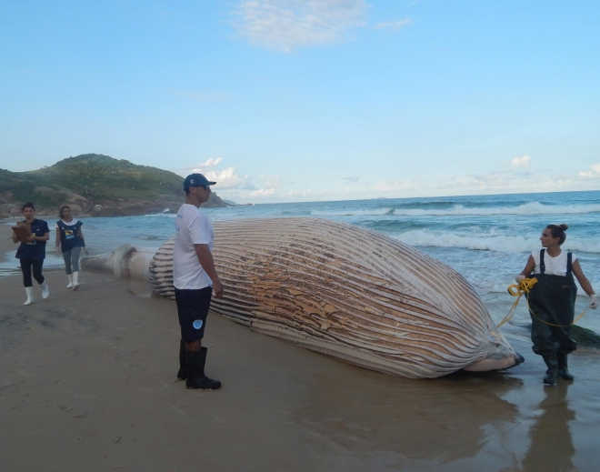 Moradores da Guarda do Embaú (SC) participam de programa que ensina a salvar baleias