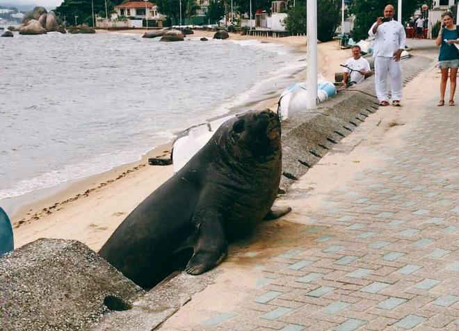 """""""Animais marinhos não são atrações turísticas"""", destaca associação R3 Animal"""