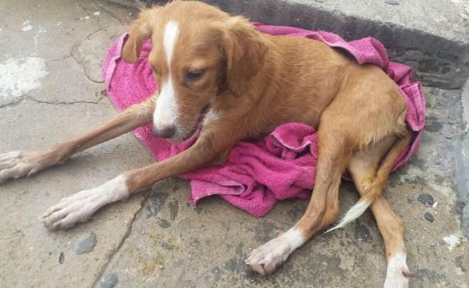Itabaianense tem três animais mortos supostamente por envenenamento