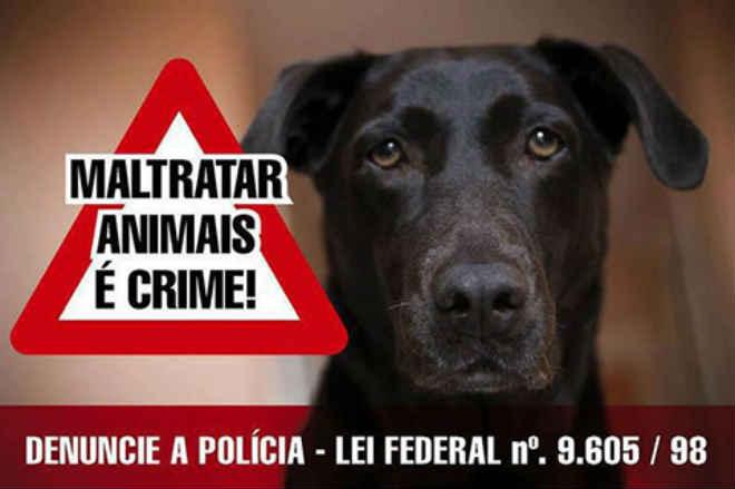 ONG de Araçatuba (SP) é obrigada a devolver animais vítimas de maus tratos e antigos tutores