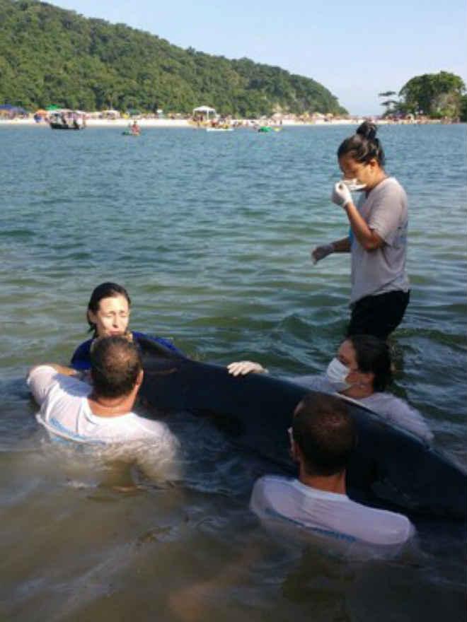 Filhote de golfinho é resgatado com vida após encalhar no litoral de SP