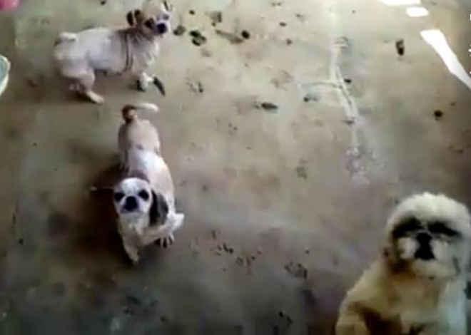 Vídeo feito em canil mostra animais sem água, sem comida e machucados, em Botucatu, SP