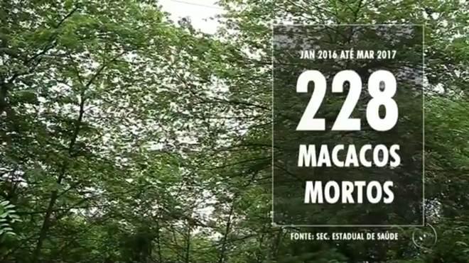 Macaco é encontrado morto em mata e suspeita é de envenenamento em Cardoso, SP