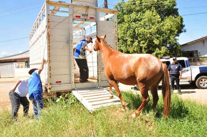 Mais de r$ 1 mil são aplicados em multas por animais de grande porte em Catanduva, SP