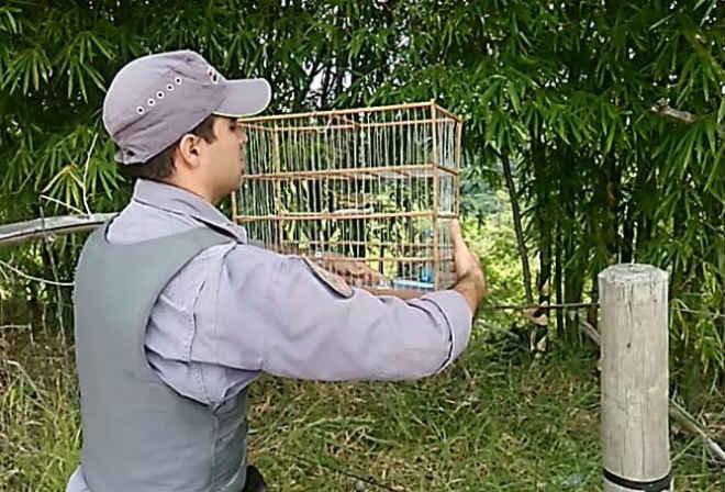 Polícia Ambiental flagra pássaros em cativeiro ilegal em Echaporã, SP