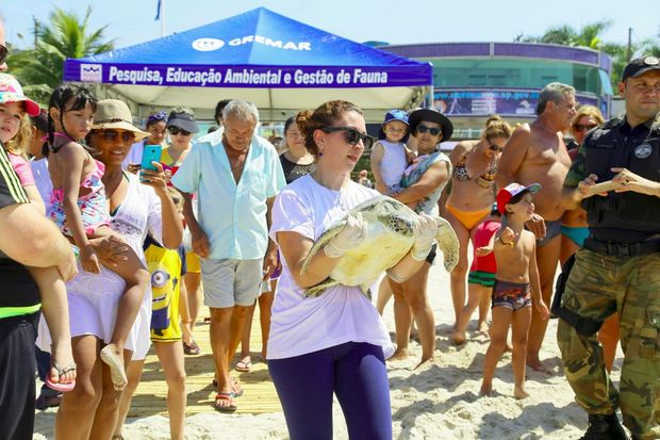 Animais reabilitados pelo Gremar, em Guarujá (SP), são devolvidos ao mar