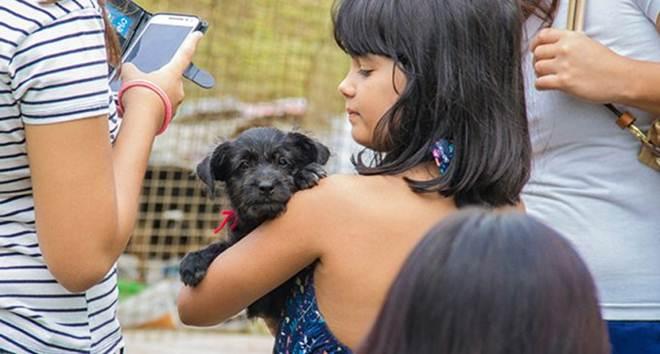 Centro de Controle de Zoonoses de Itu (SP) promove campanha de adoção de animais neste sábado (11/03)