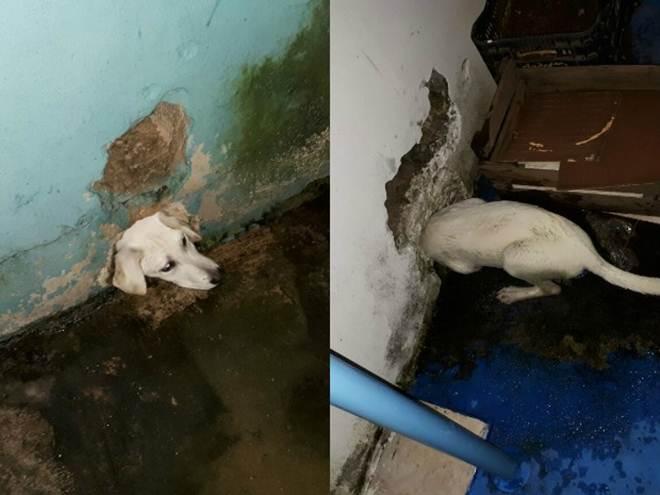 Cachorro é resgatado após ficar com a cabeça presa em buraco na parede em Jundiaí, SP