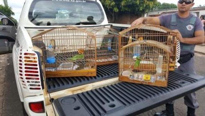 Homem é multado em R$ 2 mil por manter aves em cativeiro em Marília, SP