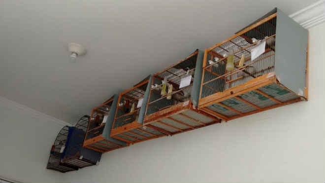 Polícia Ambiental resgata pássaros mantidos ilegalmente em cativeiro em Marília, SP