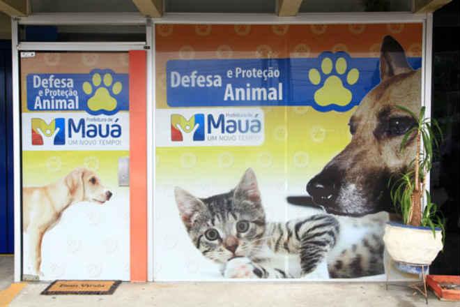 Castração gratuita para cães e gatos em Mauá, SP