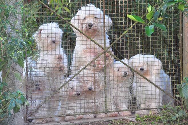 Mogi Shopping coleta ração para ONG de animais