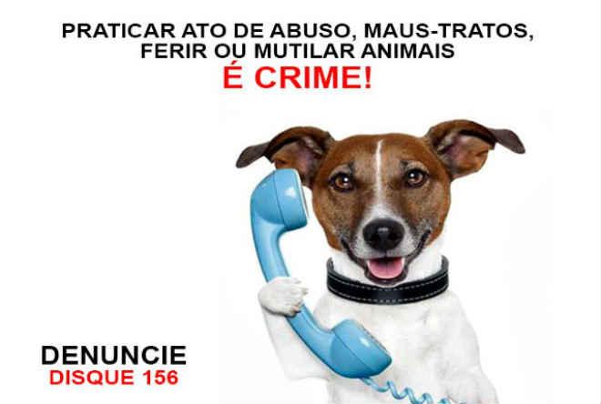 Prefeitura de Presidente Prudente (SP) recebe denúncias de maus-tratos de animais pelo 156 e WhatsApp