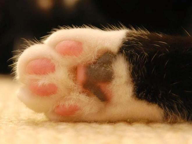 Gato é encontrado morto dentro de caixa na rua Dom Pedro II, em São Carlos, SP