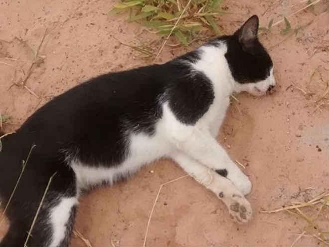 Gato morre envenenado no Zavaglia em São Carlos (SP) e protetora desabafa