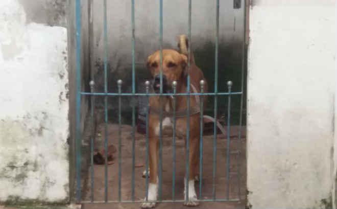 Quatro cachorros são envenenados e dois morrem em São Carlos, SP