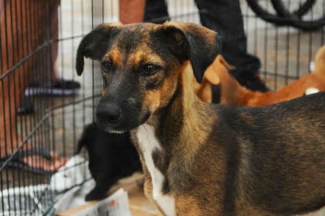 Cães e gatos podem ser adotados no Departamento de Zoonoses de São Vicente, SP