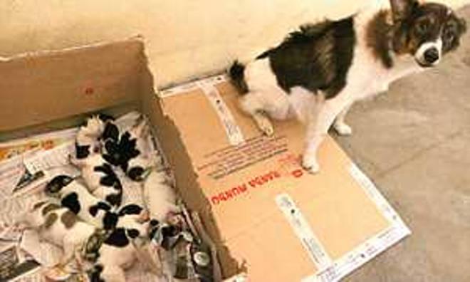 Região do ABC (SP) tem 325 animais para adoção