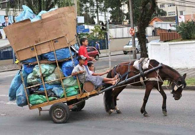 Agora é lei: São José dos Campos (SP) proíbe transporte de carga em carroças