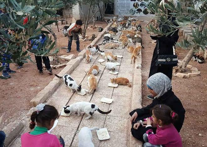 Famoso santuário de gatos na Síria foi destruído na guerra – e este homem acabou de reabri-lo