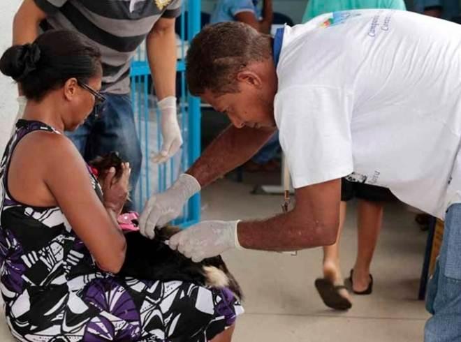 Araguaína (TO) começa vacinação antirrábica por bairros periféricos