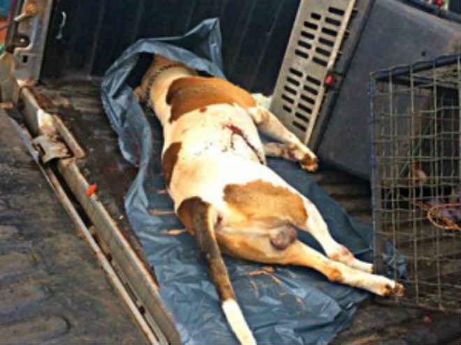 Homem é detido suspeito de matar cachorro de vizinho com tiro em Araguaína, TO