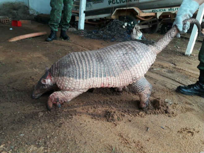 Tatu gigante ameaçado de extinção é resgatado com ferimentos no TO