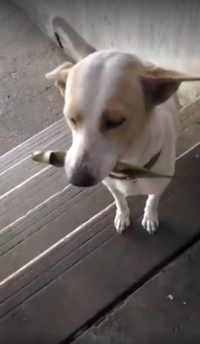 Cão abandonado leva presentes para mulher que o alimenta