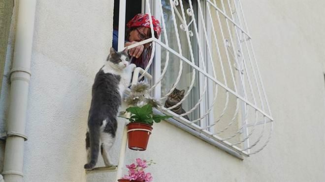 Mulher constrói escada para que gatos de rua tenham um abrigo durante a noite
