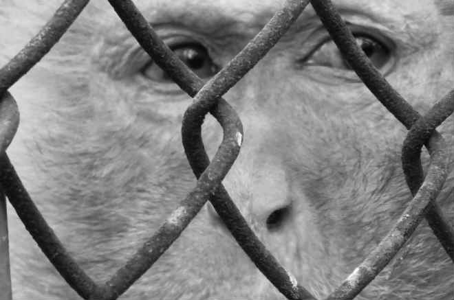 Exija que a Vietnã Airlines pare de transportar primatas para os laboratórios horríveis da Rússia; Petição